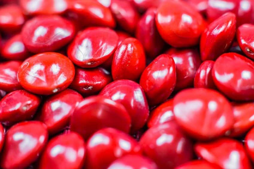 Adenanthera pavonina - red love beans.